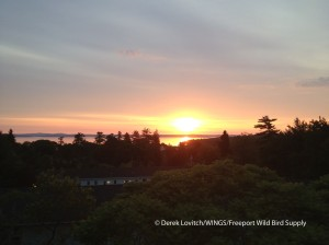 IMG_0951_Summer_Solstice,Bar_Harbor,6-21-13_edited-1