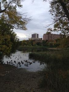 p Loring Park, MN