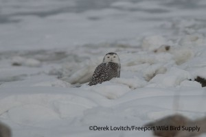 DSC_0025_SNOW1,Back Cove,12-19-13