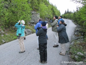 Birding_Auto_Road_by_Kristen2_edited-1