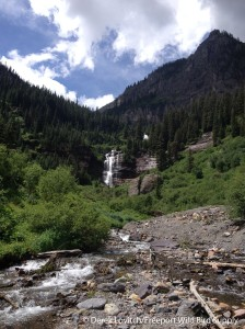 Bear Creek Trail, Telluride,7-13-14