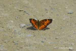 flutterby,Nancy_Houlihan_edited-1