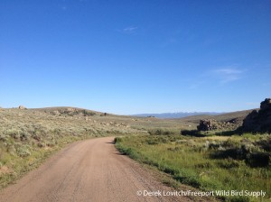 Gold Basin Road, Gunnison, 7-10-14