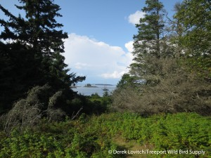 IMG_2199_Calderwood_Island_Preserve,8-7-14
