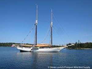 IMG_2213_off_Calderwood_Island,8-8-14