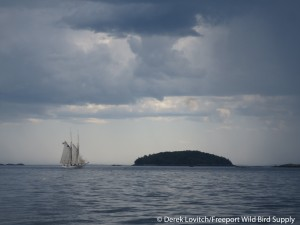 IMG_2217_off_North Haven,8-8-14