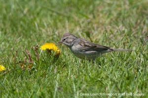 DSC_0124_BRSP1,Monhegan,5-25-14_edited-1