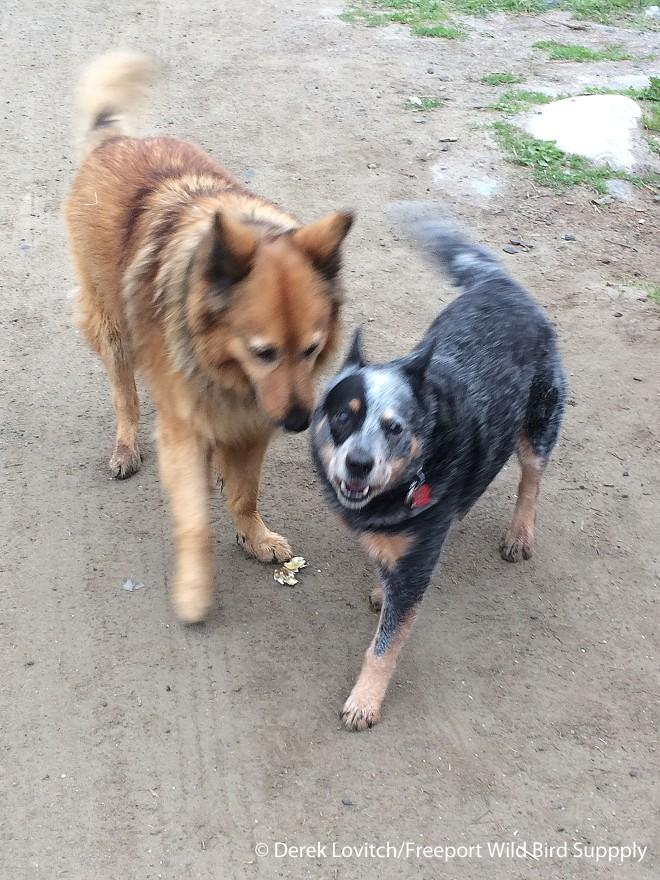 Sasha_and_Chaco,5-19-15_edited-1