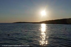 21. L1020667_Seal_sunrise,7-23_edited-1
