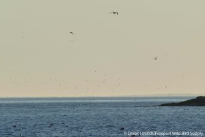 22. L1020673_Seal_terns,7-23_edited-1