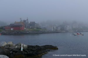 9. L1020554_departingMonhegan,7-21_edited-1
