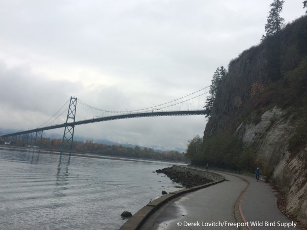 Day2-Stanley Park1
