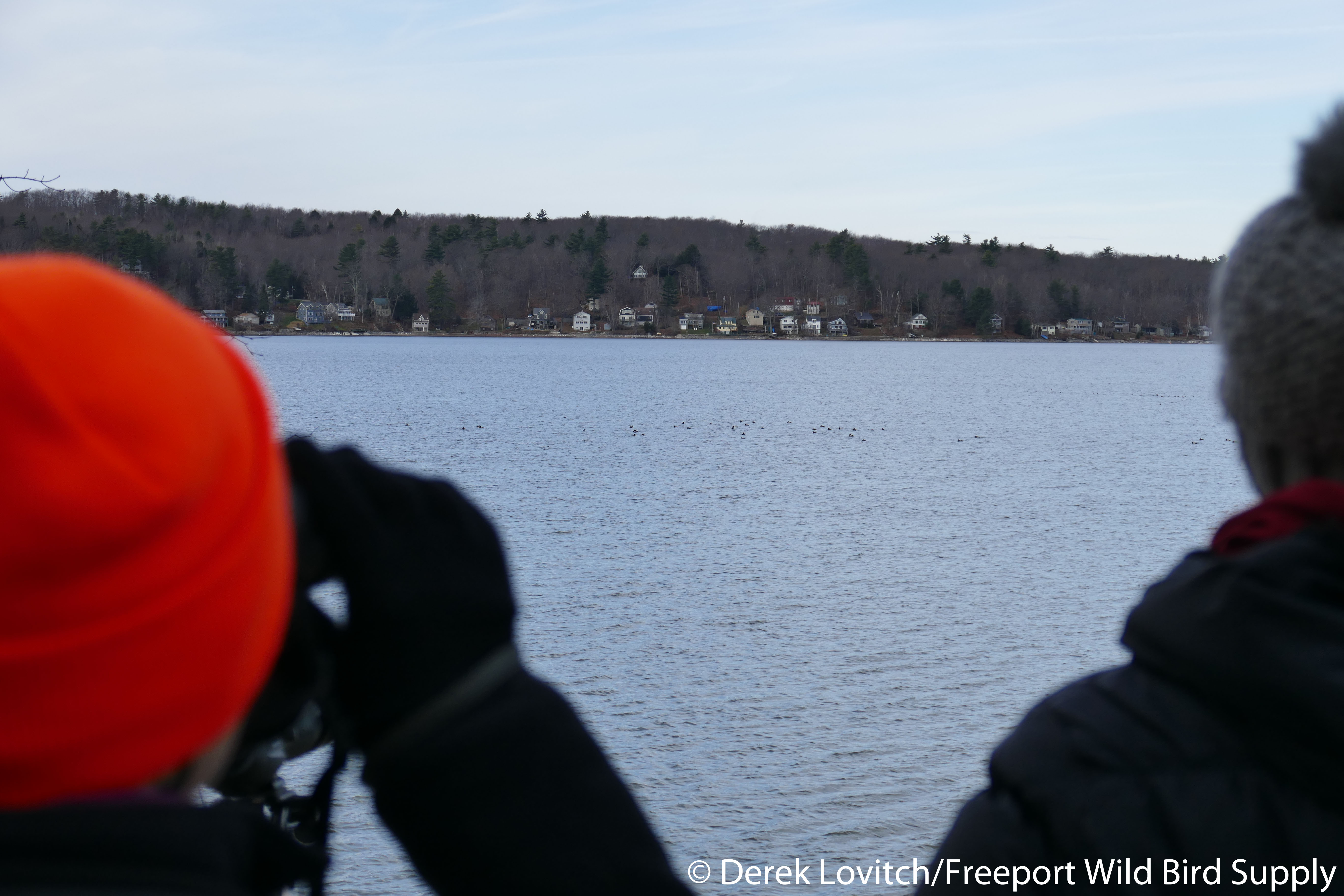 scaup scanning