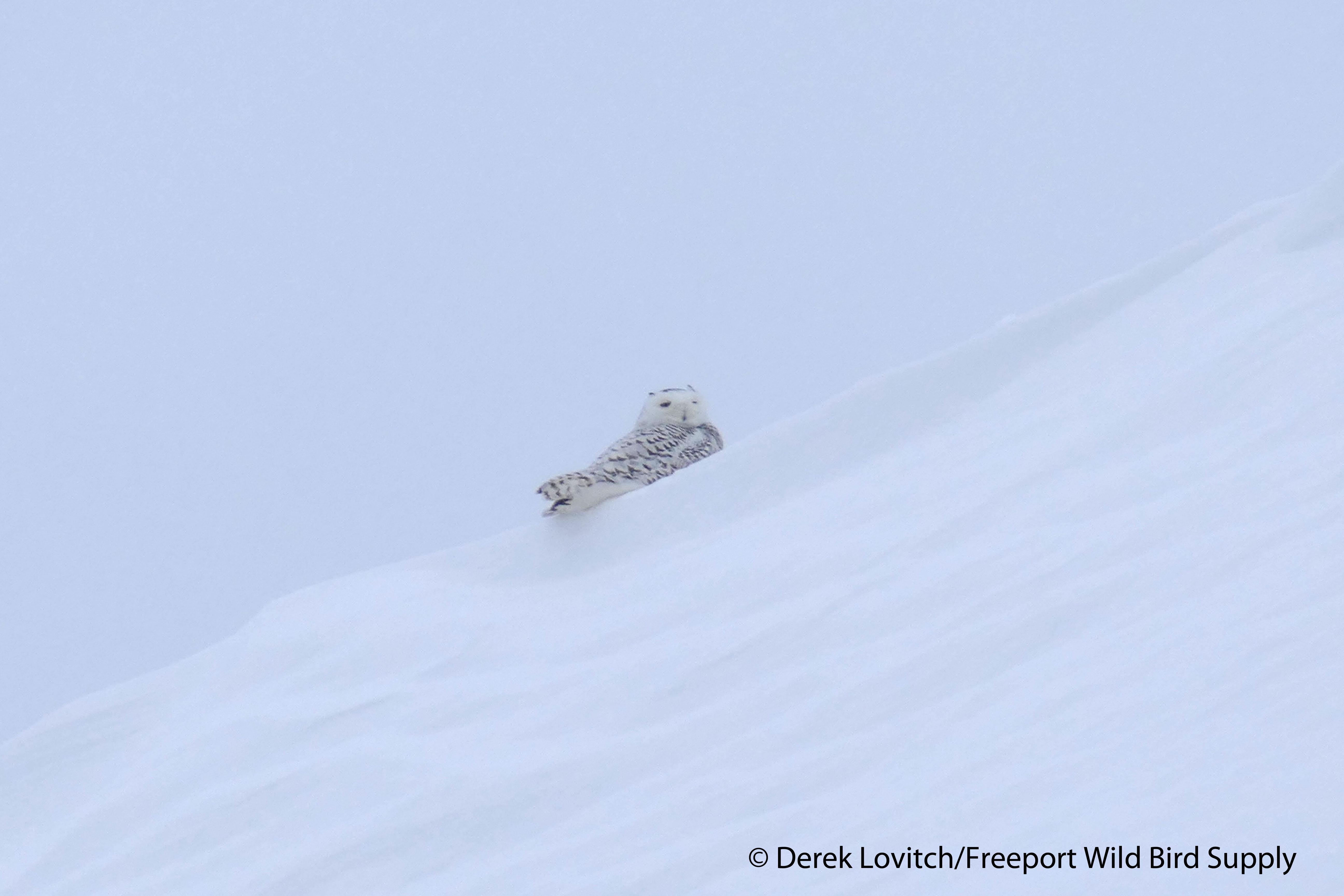 SNOW,Brunswick_Landing_birdwalk,1-31-15_edited-1