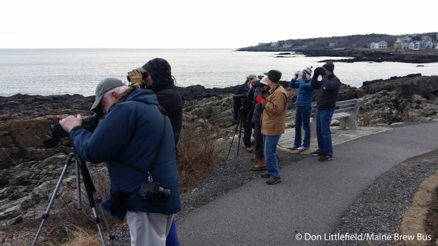 birders at Marginal Way