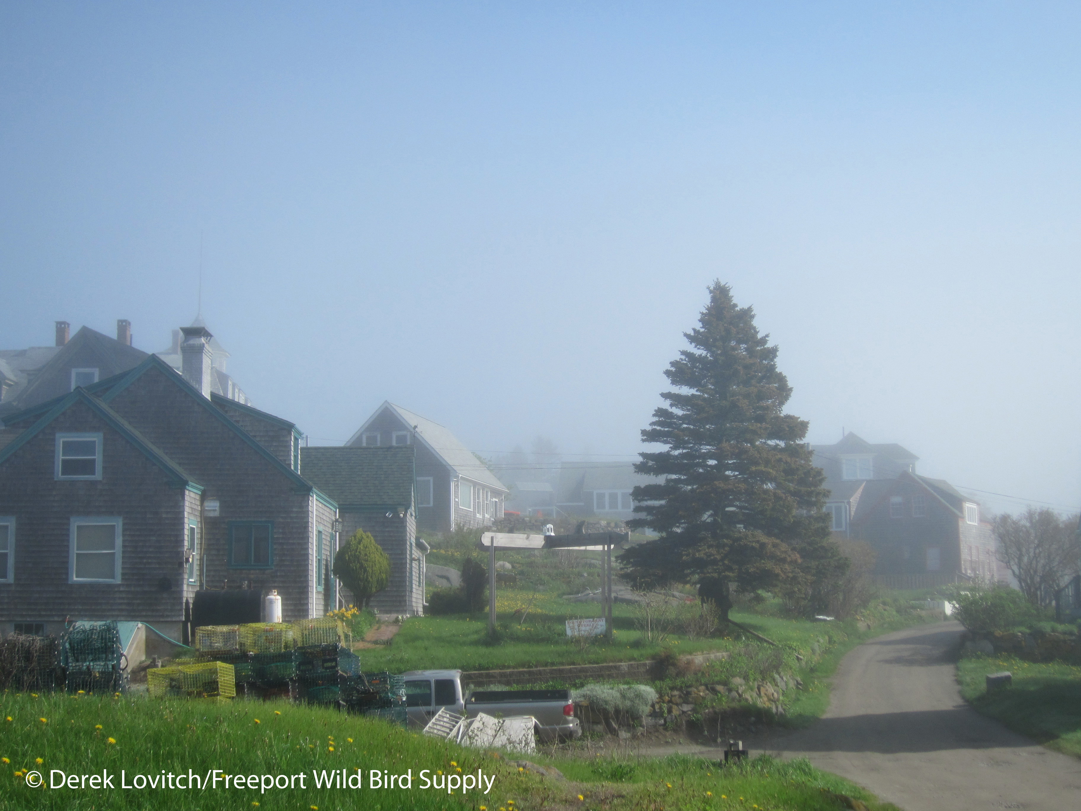 Monhegan, 5-21-11_edited-1