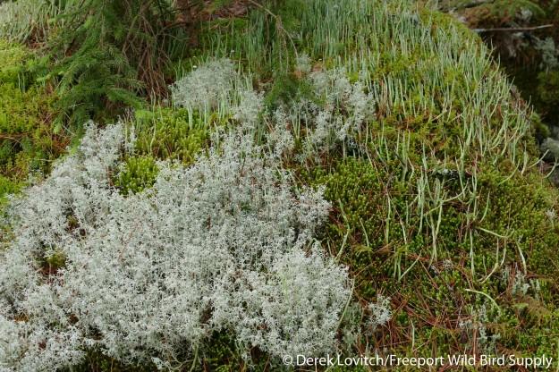 15. lichen_garden_edited-1