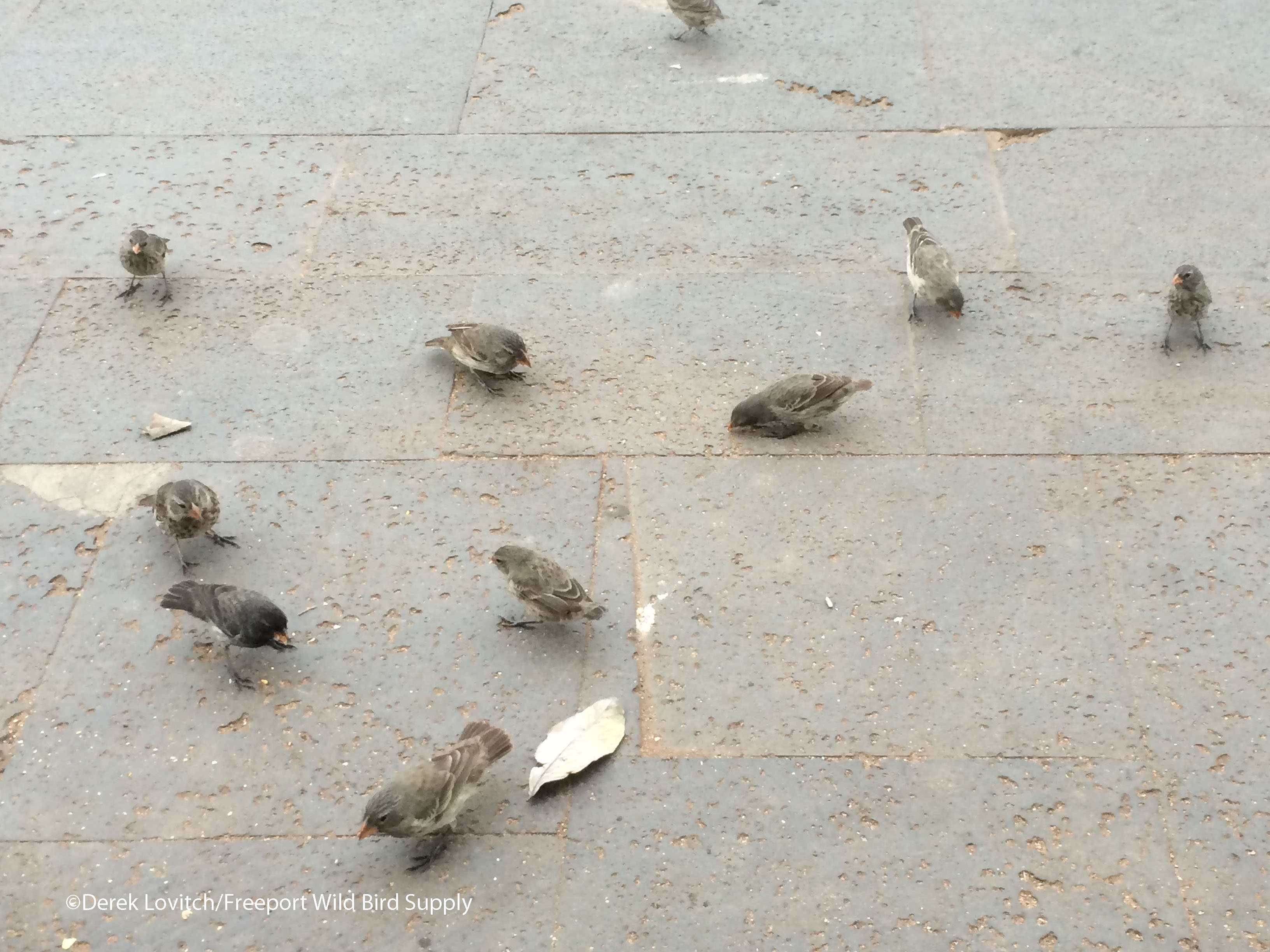 finches_edited-1