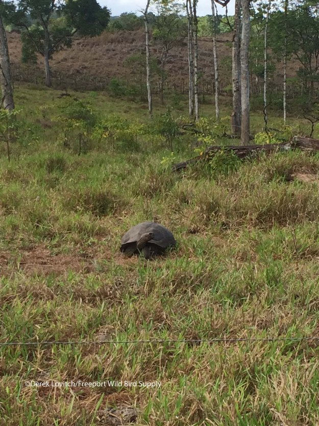 firstWildTortoise