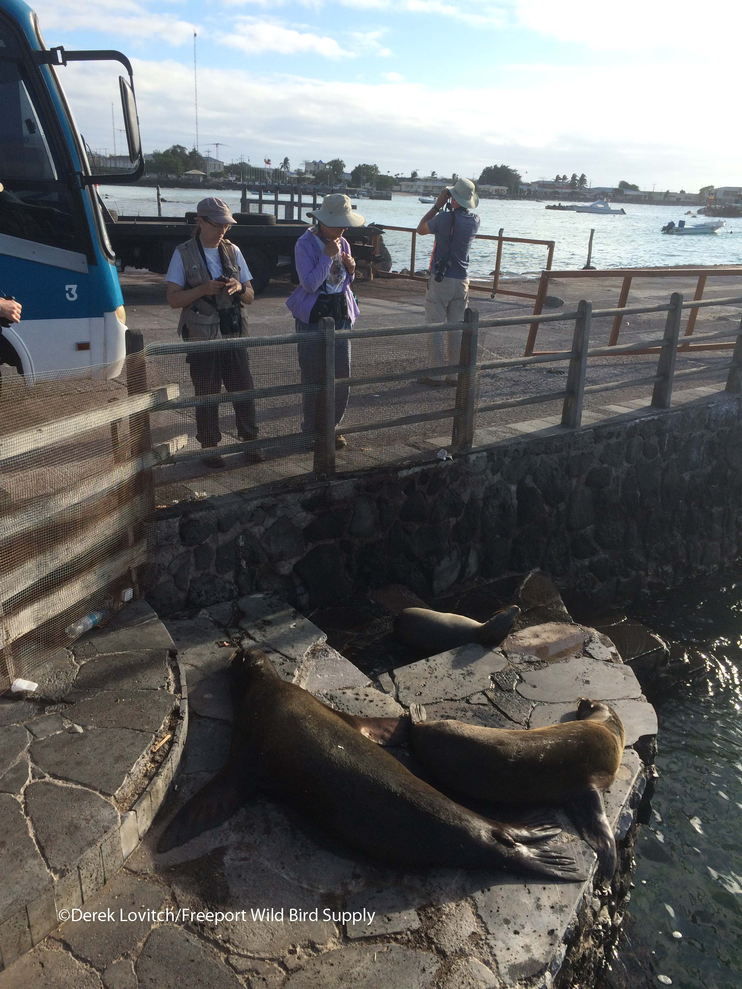 Sea Lions at dock