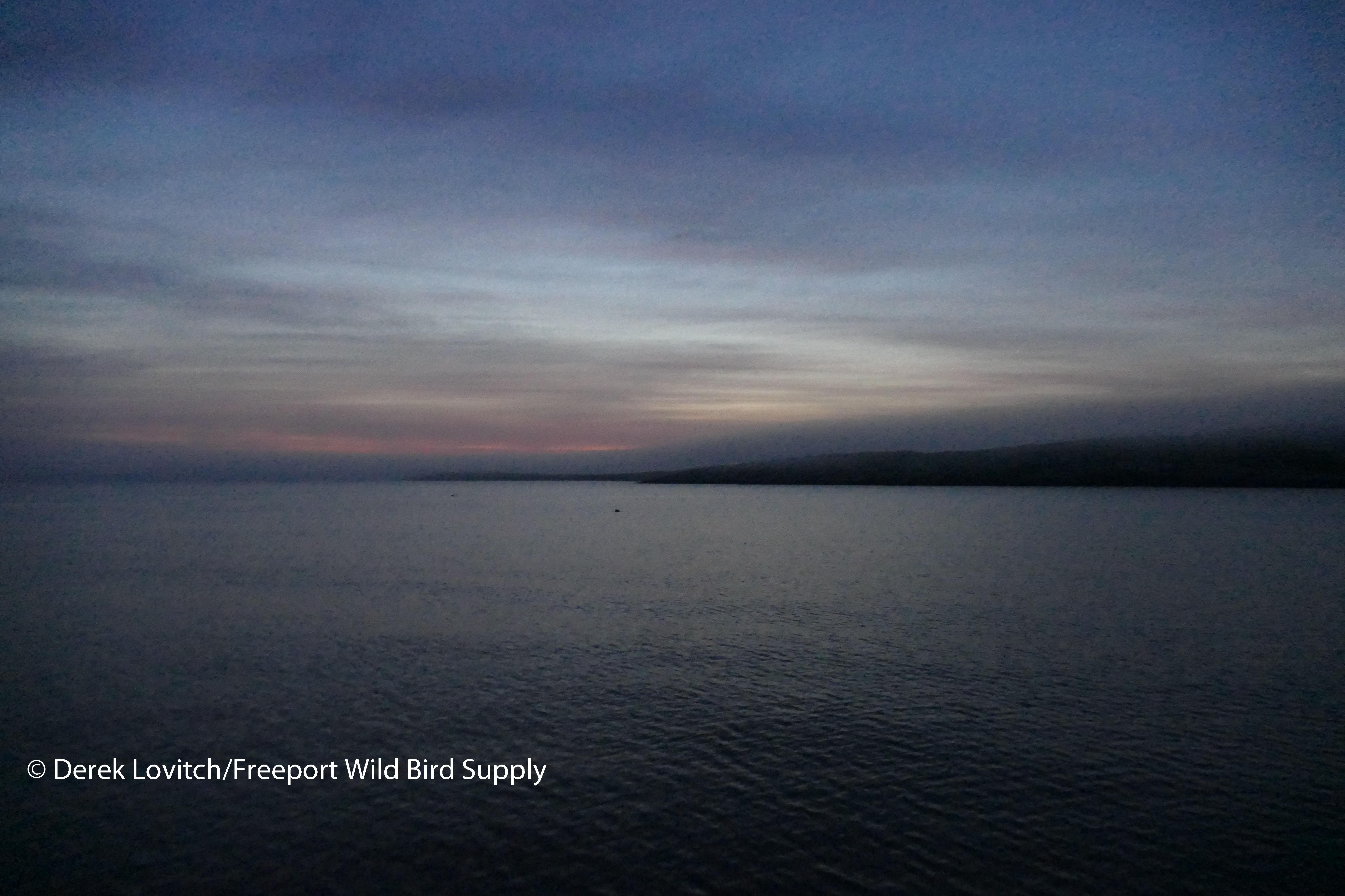 27. Seal sunrise_edited-1
