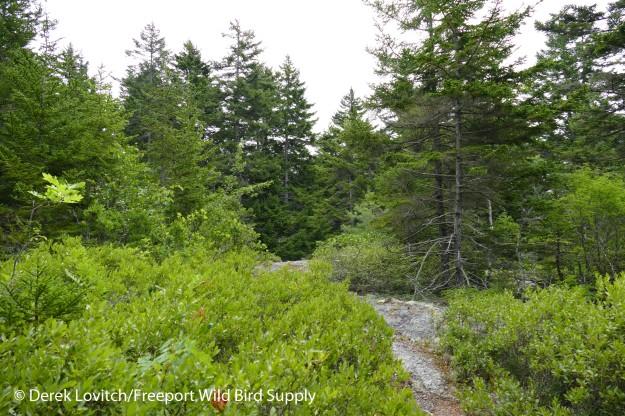 51. North Perry Creek Preserve_edited-1