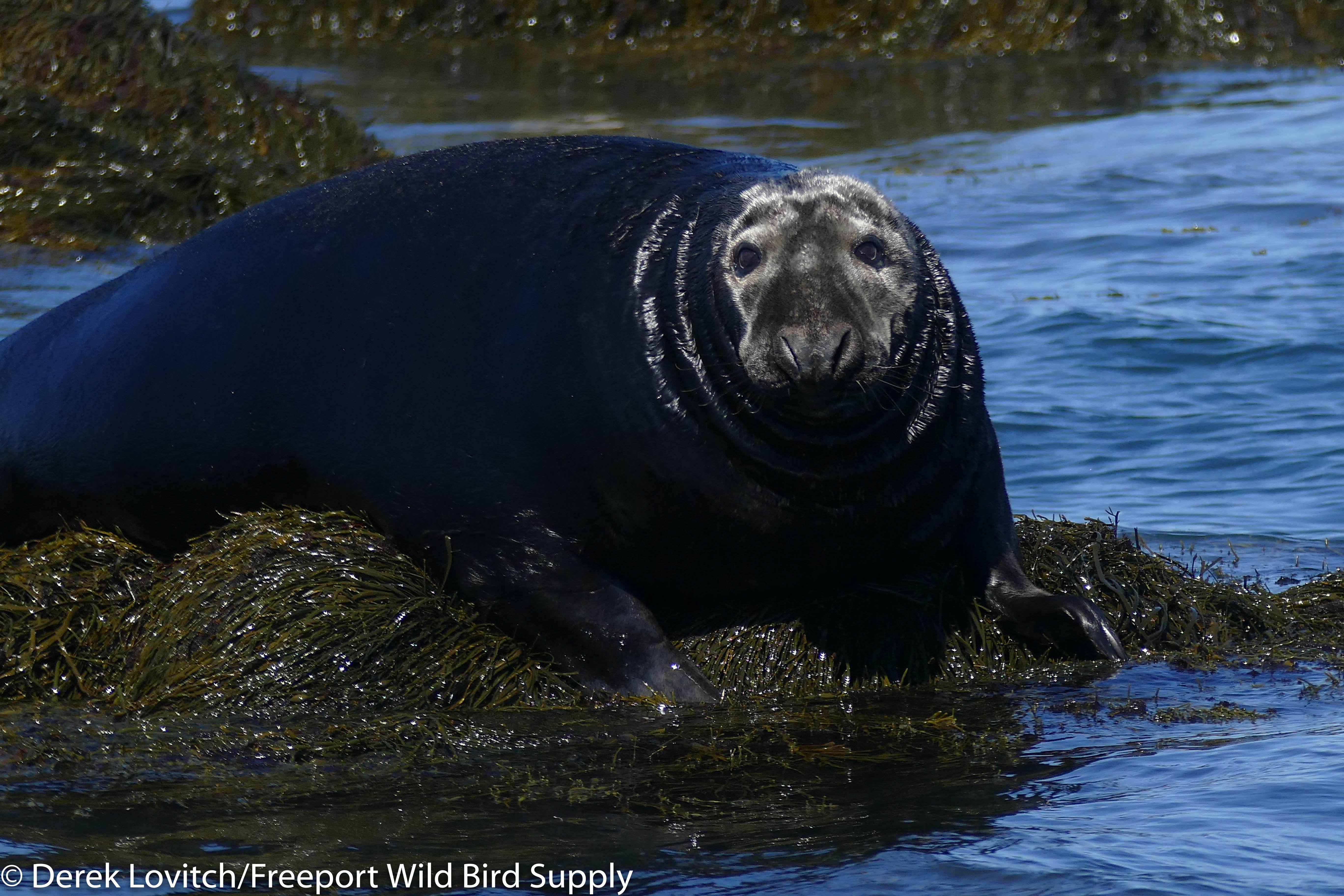 20. boat trip 11 - Gray Seal 2