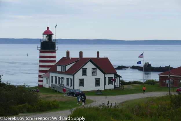 35. Quoddy SP