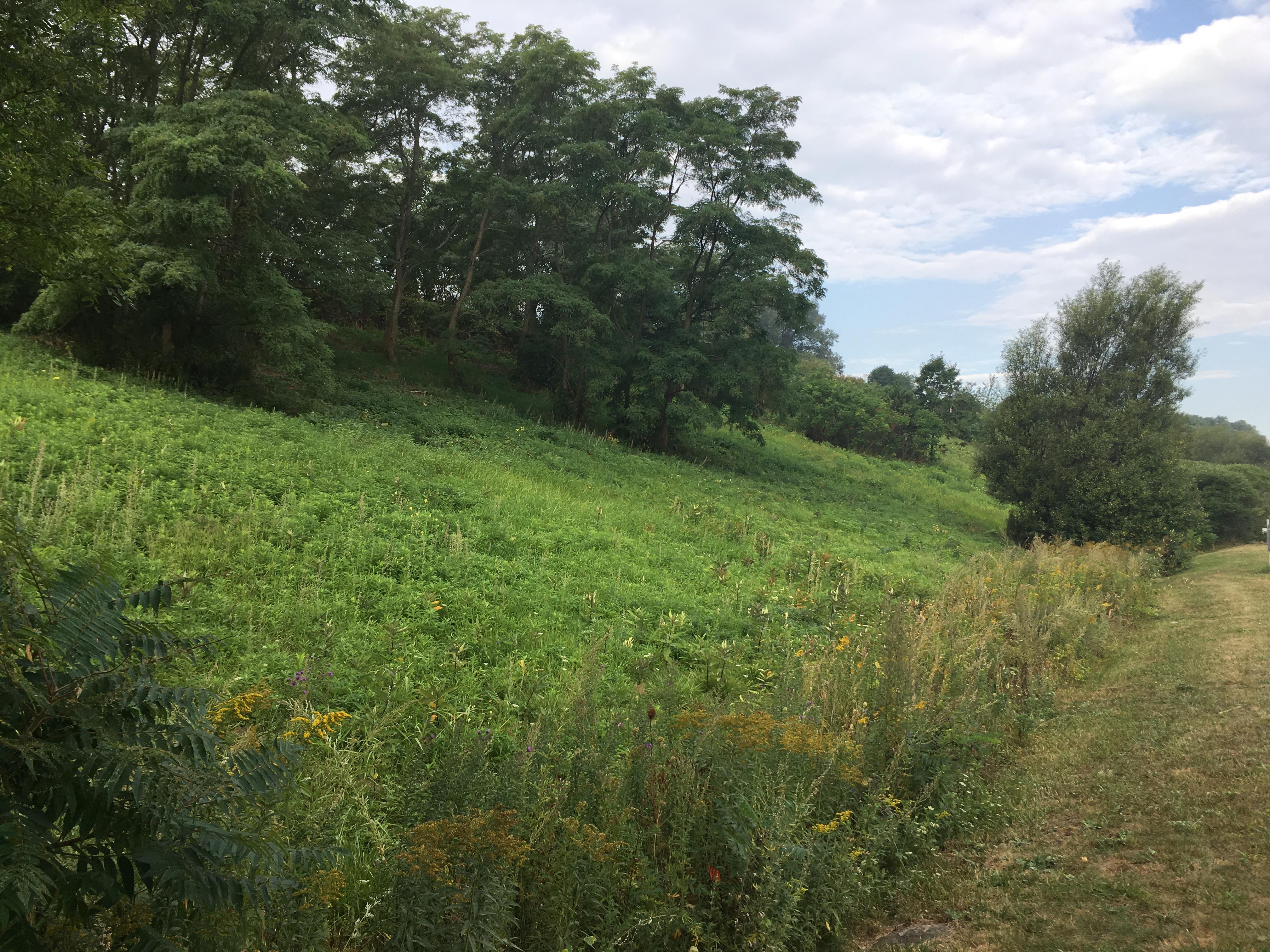 non-meadow