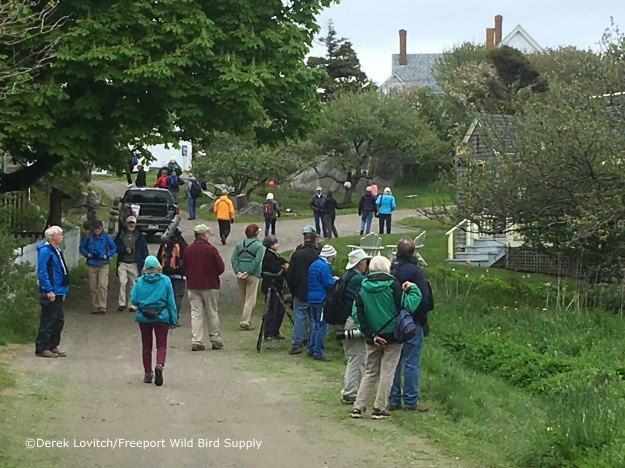 so_many_birders2,Monhegan,5-17-17_edited-1