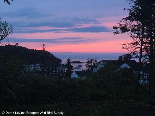 Yew_sunset