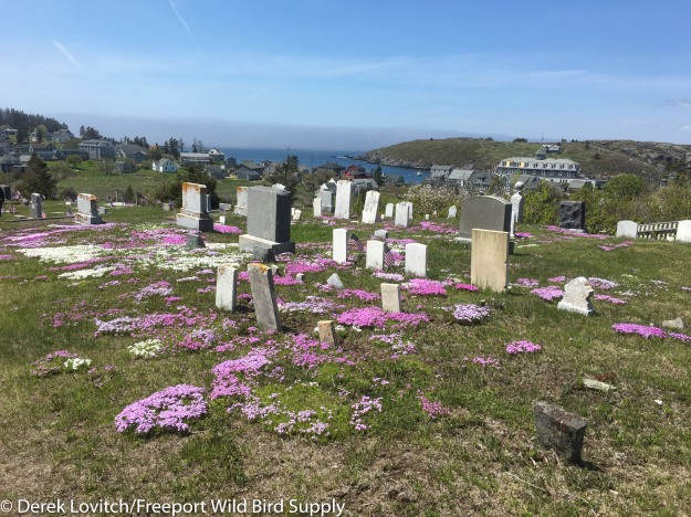 cemetery-edited