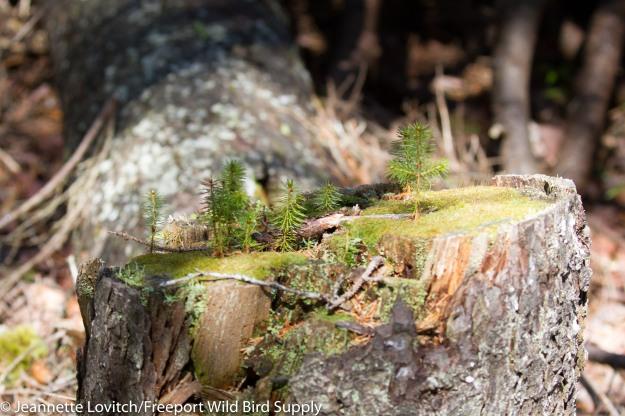 stump_garden_J-Mo