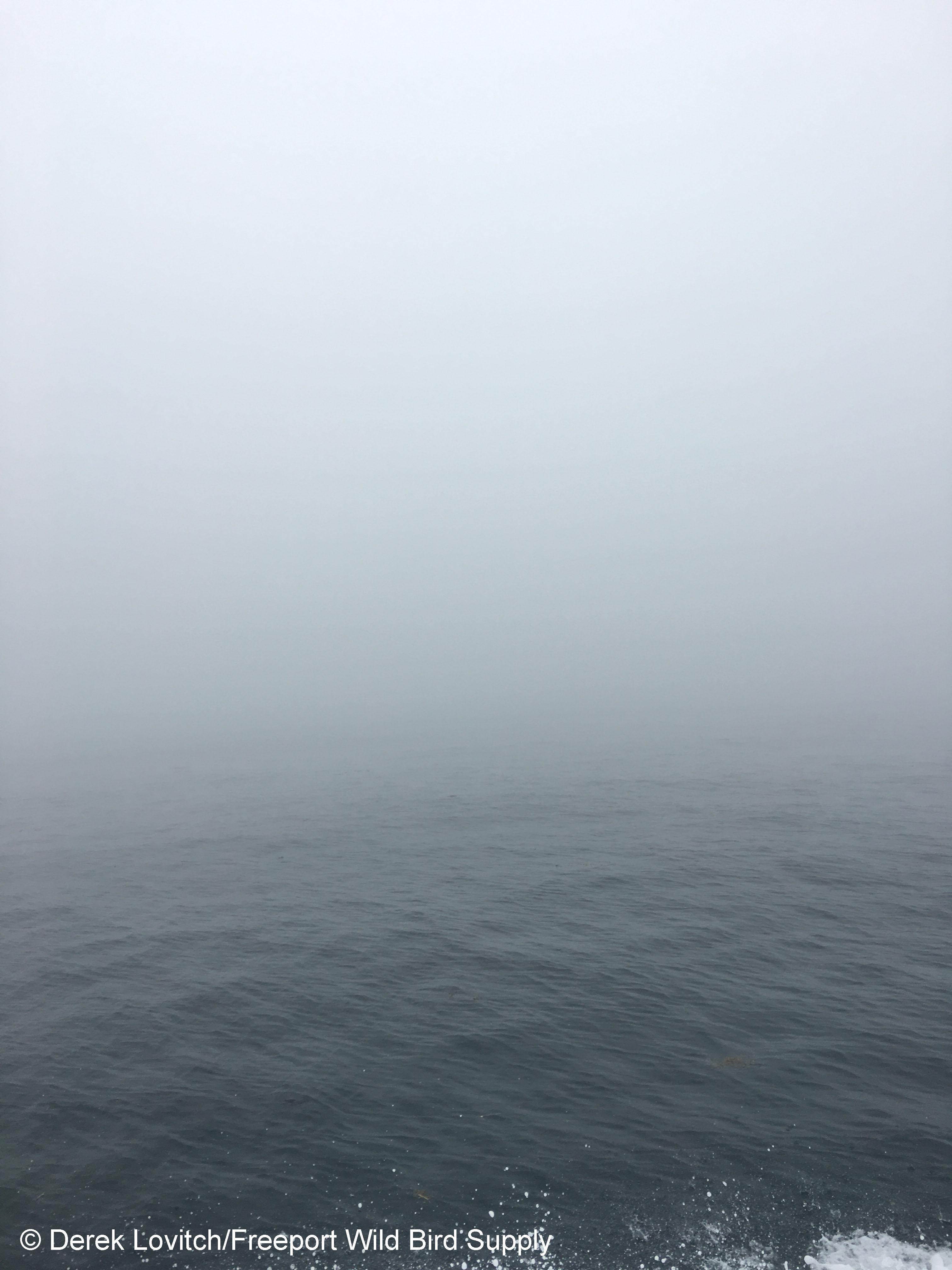 IMG_6465_dense_fog
