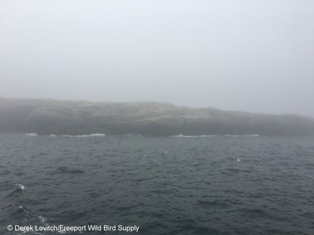 IMG_6471_Seal_in_Fog